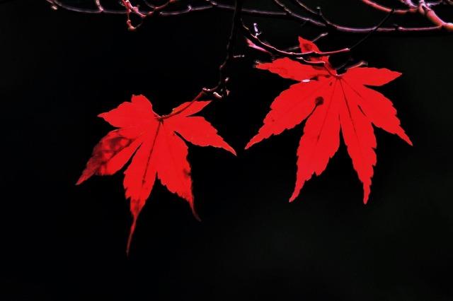 秋模様10