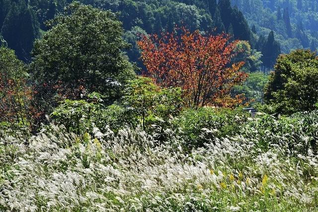 秋の風情1
