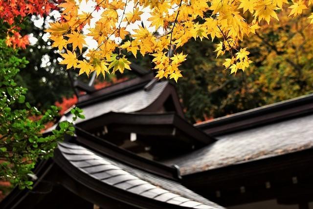 春日神社4
