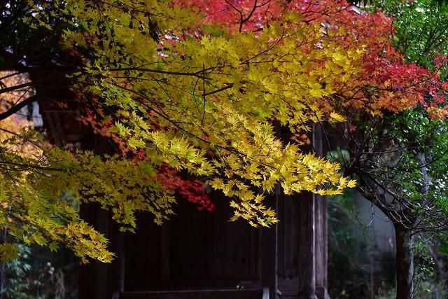 春日神社5