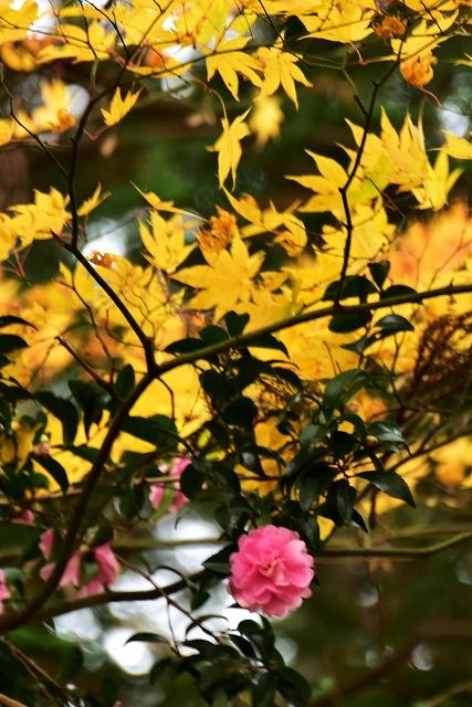 春日神社18