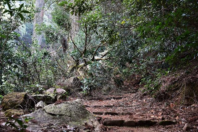 登山道10