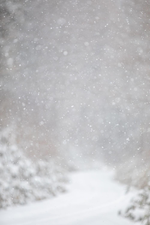 雪の朝_1