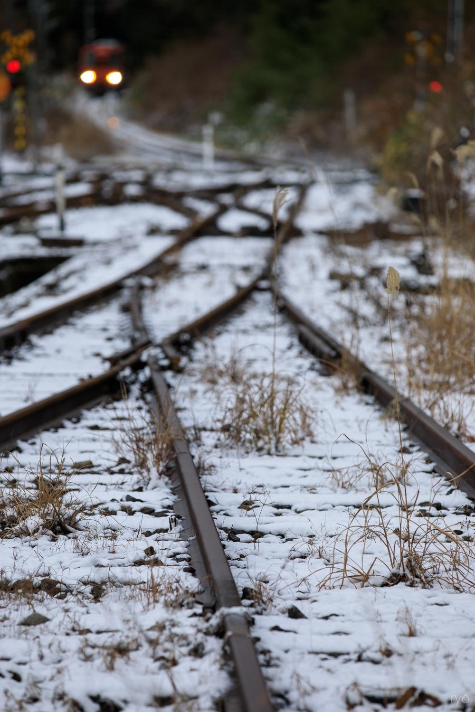 薄っすらの雪の朝に_2