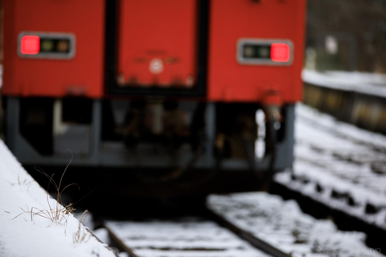 薄っすらの雪の朝に_3
