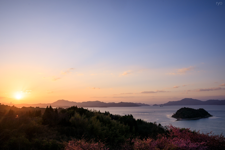 河津桜と_5