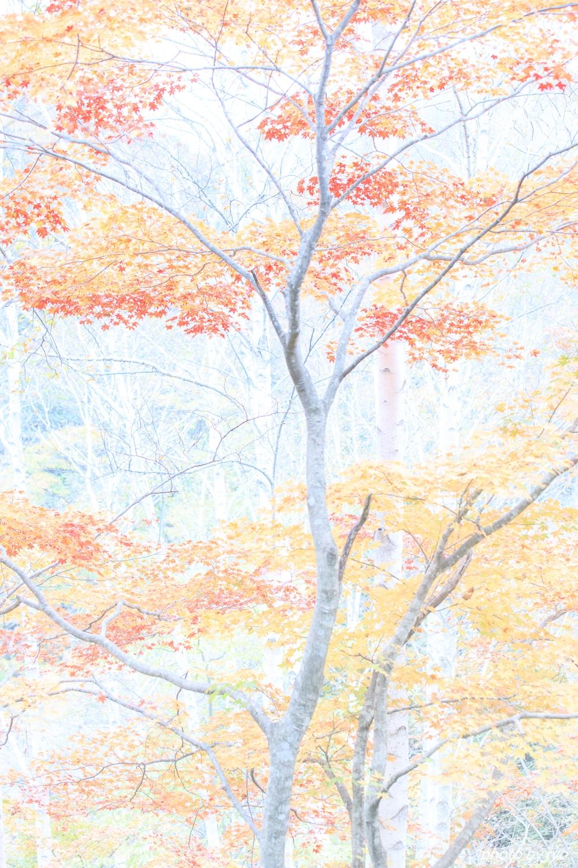 恋する白樺林_5