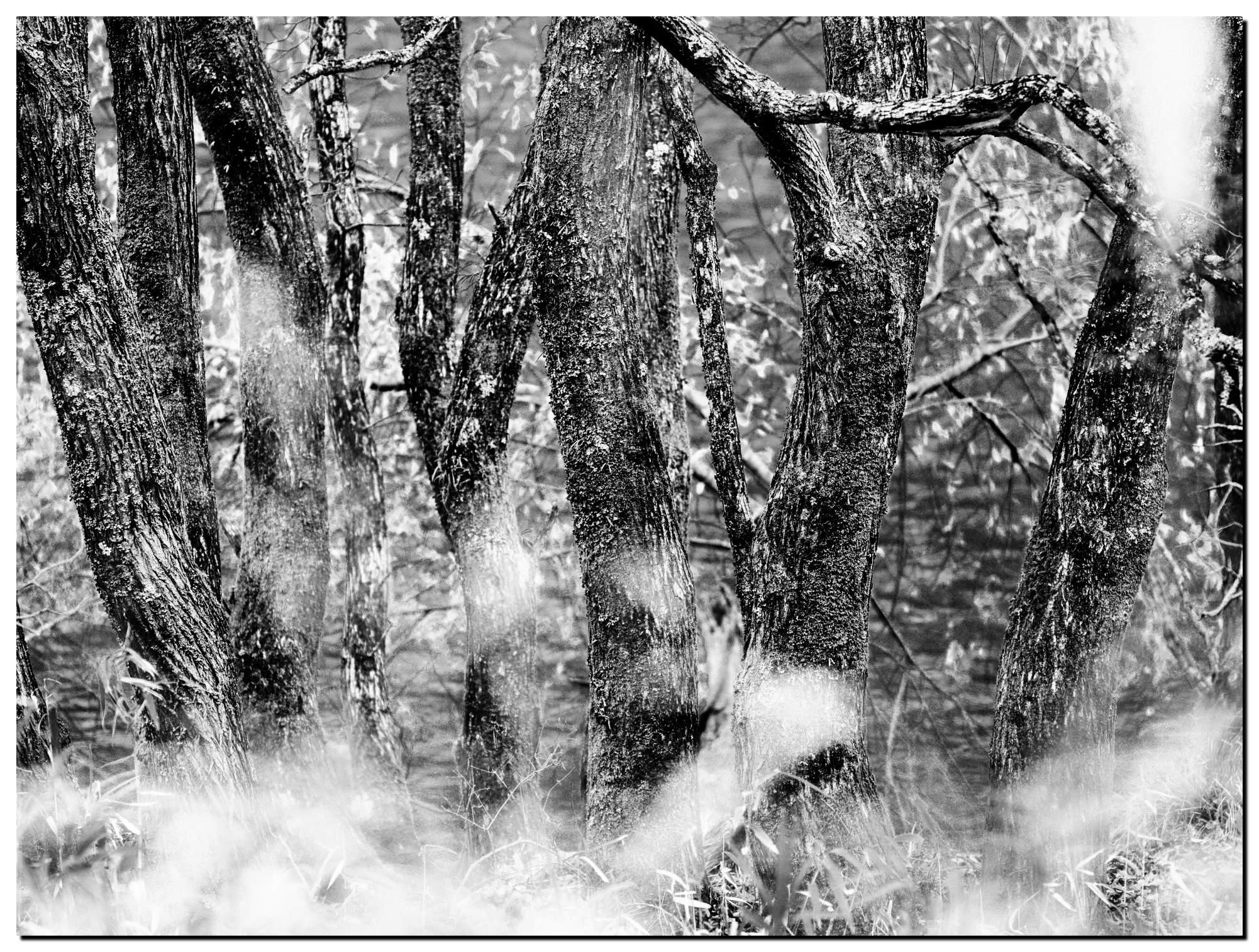 01LR-PF140959-Edit-2-1.jpg