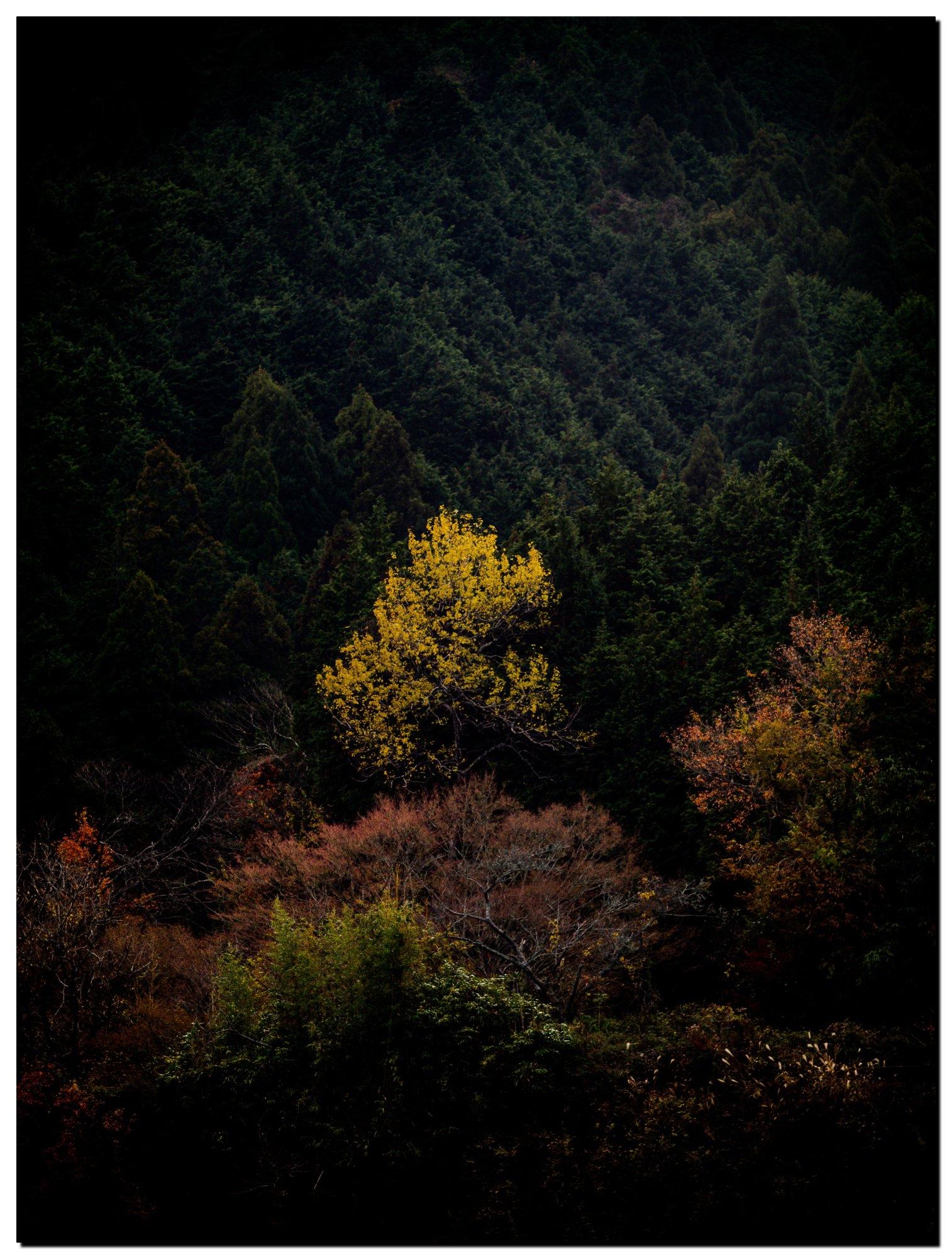 03LR-PF140884-Edit-6.jpg