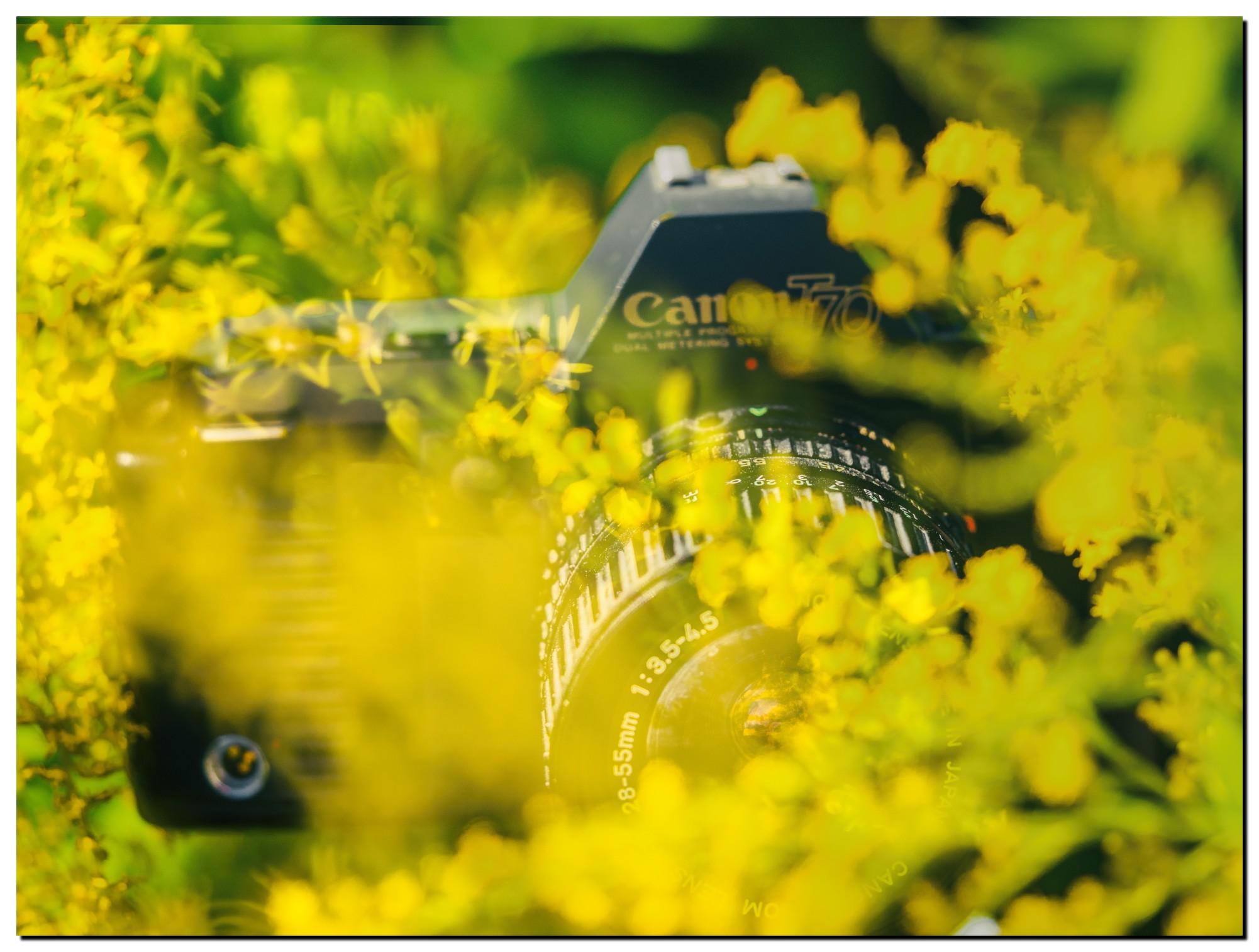LR-PF229080-Edit-3.jpg