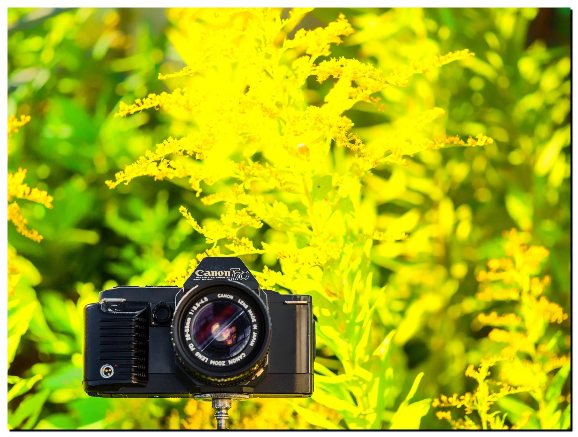 LR-PF229084-Edit-3.jpg
