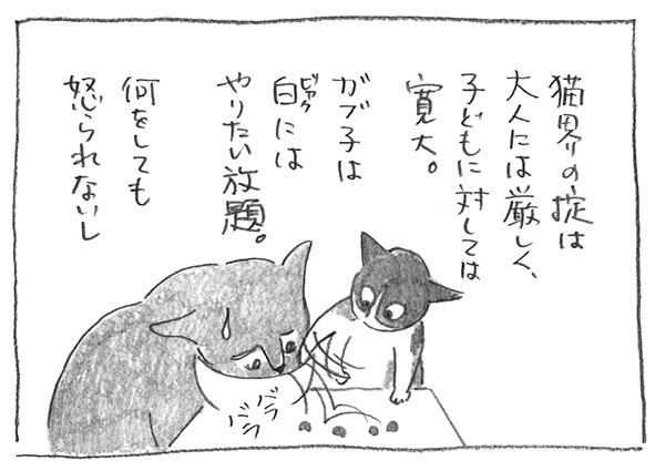 1-0715猫の掟