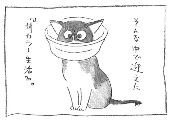 3-0903丼カラ