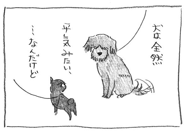 3-1128犬