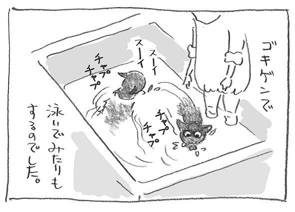 6-1202泳ぐ