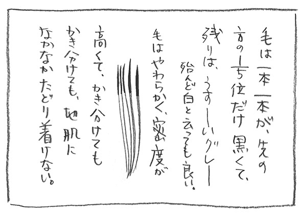 3-1224毛先