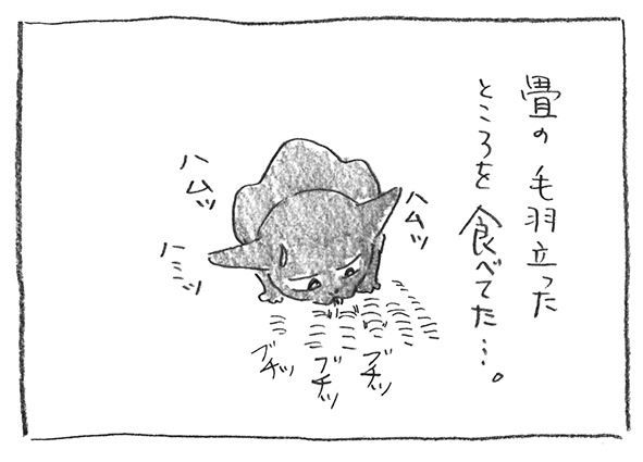 8-0104畳食べる