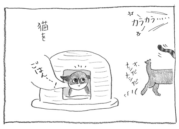 3-0129猫を