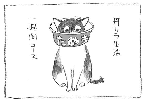 5-0207丼カラ