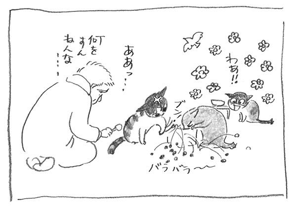 8-0228鳩ぽー