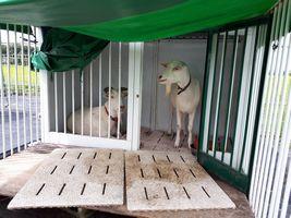 【写真】小屋で雨がやむのを待つアランとポール