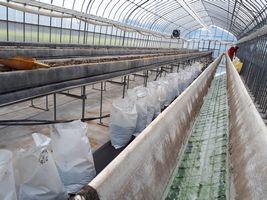 【写真】掘り出した培土を袋に詰めて、排水修理作業中の高設ベッドの様子