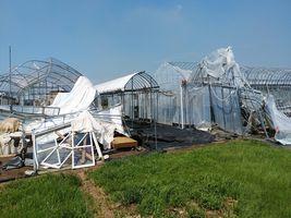 【写真】台風15号で倒壊した受付ハウスと本圃ハウス