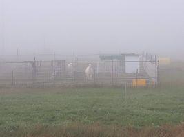【写真】濃霧のアランフィールドに立つアランとポール