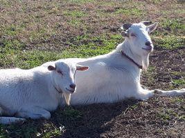 【写真】寄り添って座りながら、こちらを見上げるアランとポール
