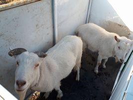 【写真】修繕中の屋根のない小屋に入って中を確認するアランとポール