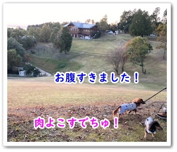 IMG_5013.jpg
