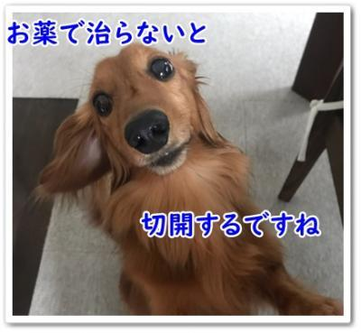IMG_9388_convert_20190830182323.jpg