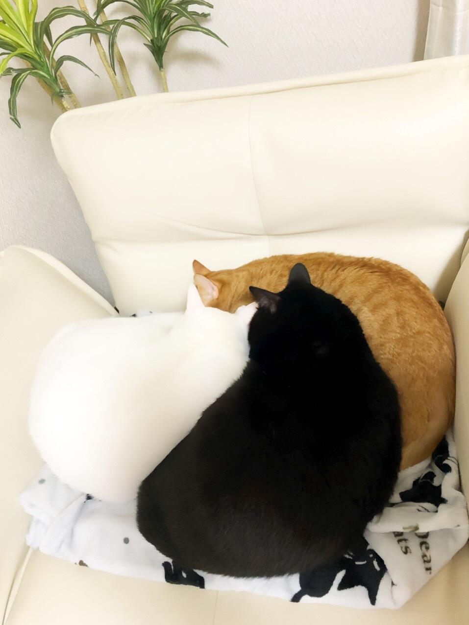 色々な場所で見かける猫団子❤️