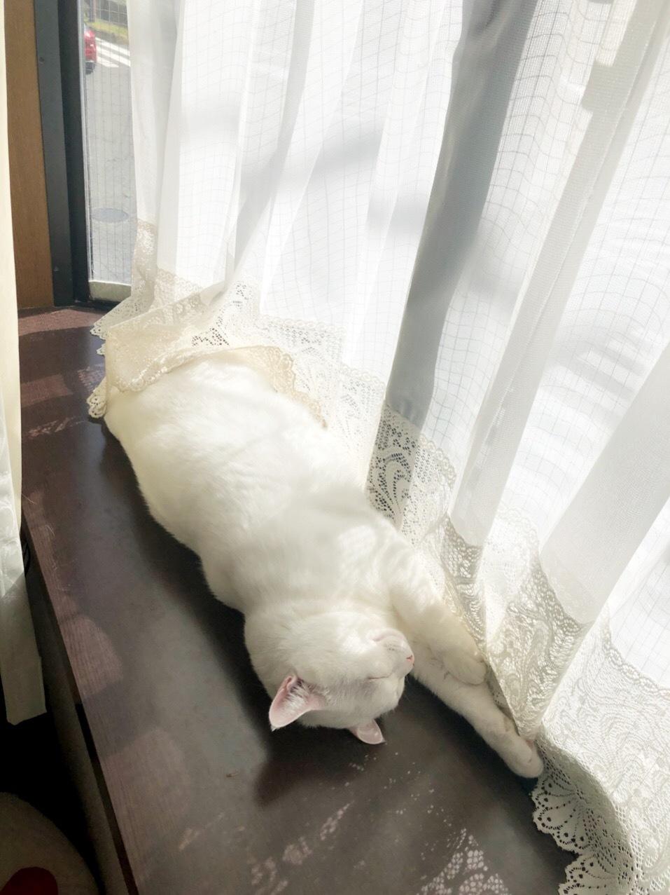 日向ぼっこしながらお昼寝のゆめのすけ🌸