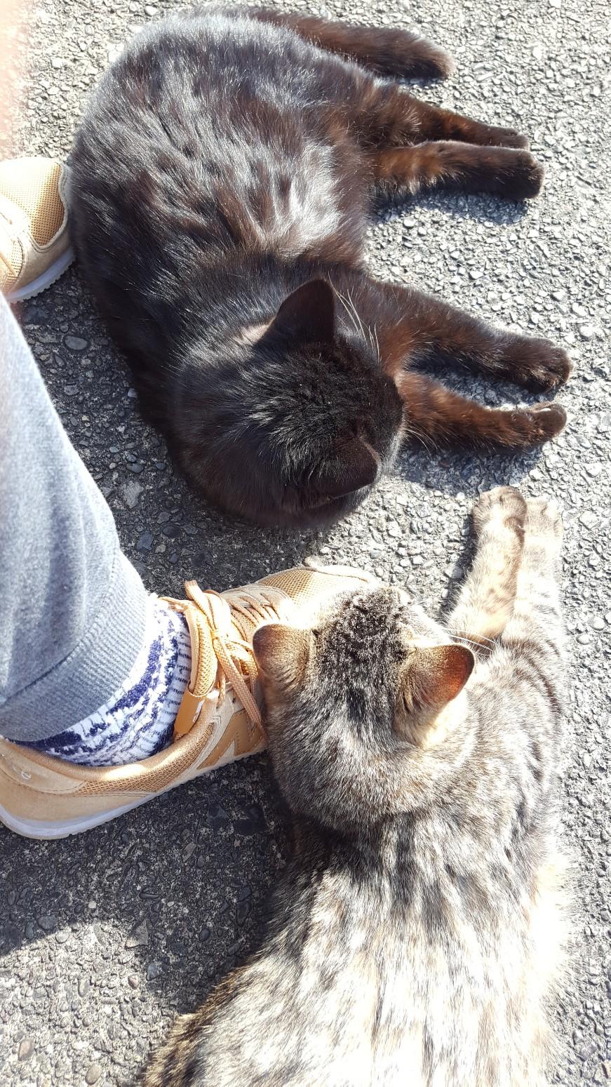 2/4 食後のシマちゃんとビビ。 私を見上げる顔がかわいい💗 この日は暖かくて、2匹はしばらくこの体勢でのんびりしてました。くつろいでくれてうれしいです😊