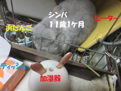 sinba20200130.jpg