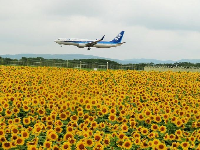 ひまわりと飛行機 (7)