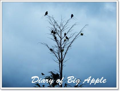 夕暮れの小鳥たち