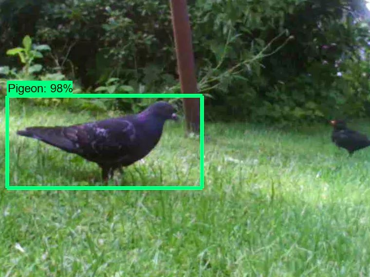 20190703_Pigeon Detection System_01
