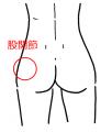 股関節後方1
