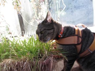 草の匂いを嗅ぐ