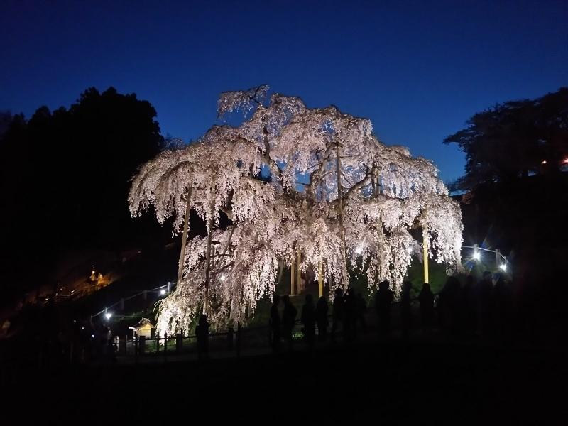 20190422滝桜 (800x600)