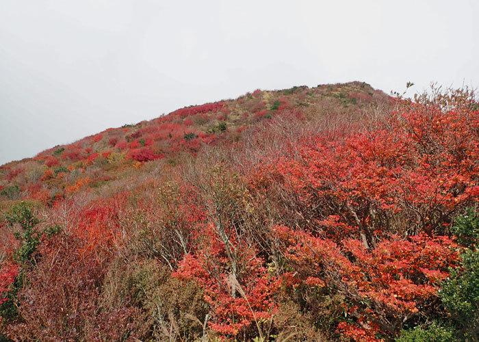 2019,11,4,普賢岳-11