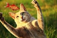 鮮度の良い魚を選ぶ猫