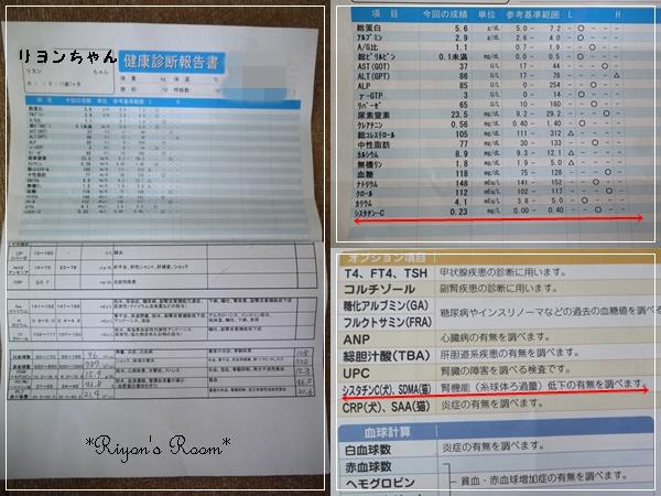 シスタチンC検査③
