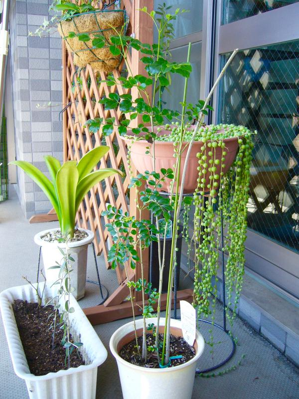 10年ひと昔、植物のびっくり成長