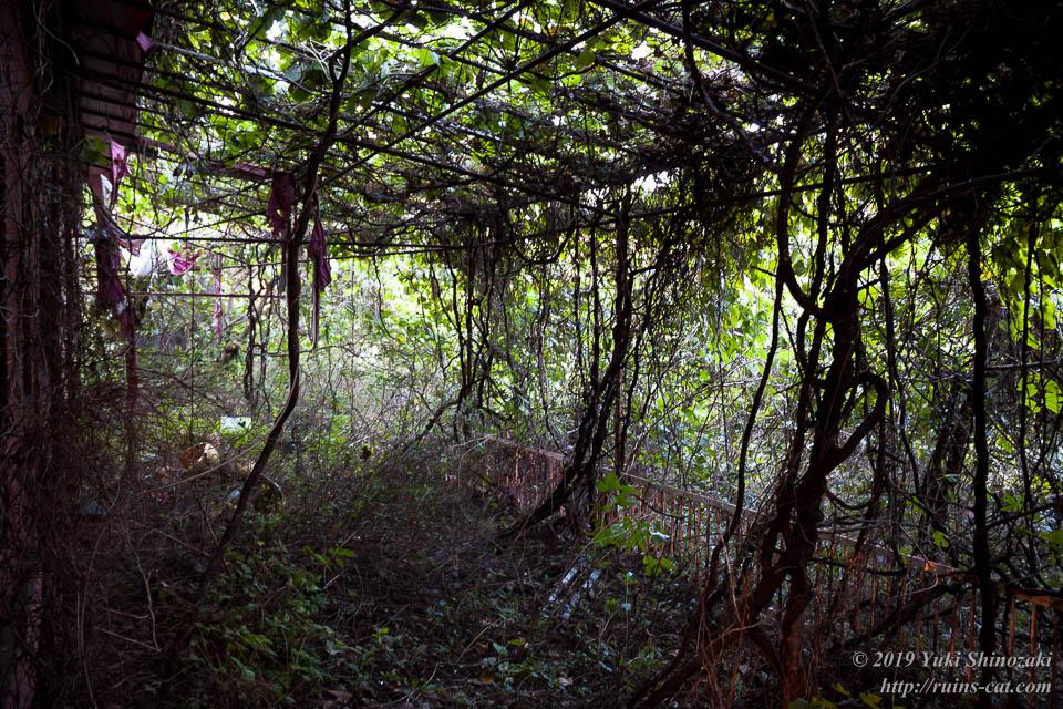 蔦系の植物に覆い尽くされた1階バルコニー