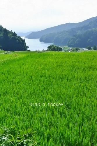 2019年8月野尻湖と棚田
