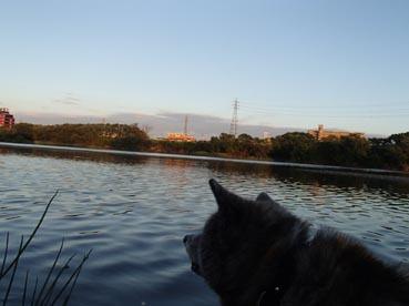 夕暮れ川1