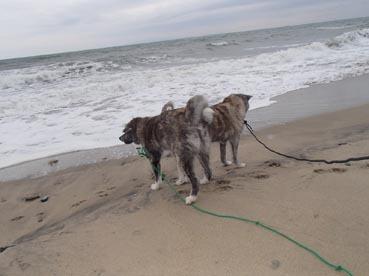 浜散歩10